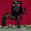 Lisana Ltd Reserved Grand National Champion Performance Mare
